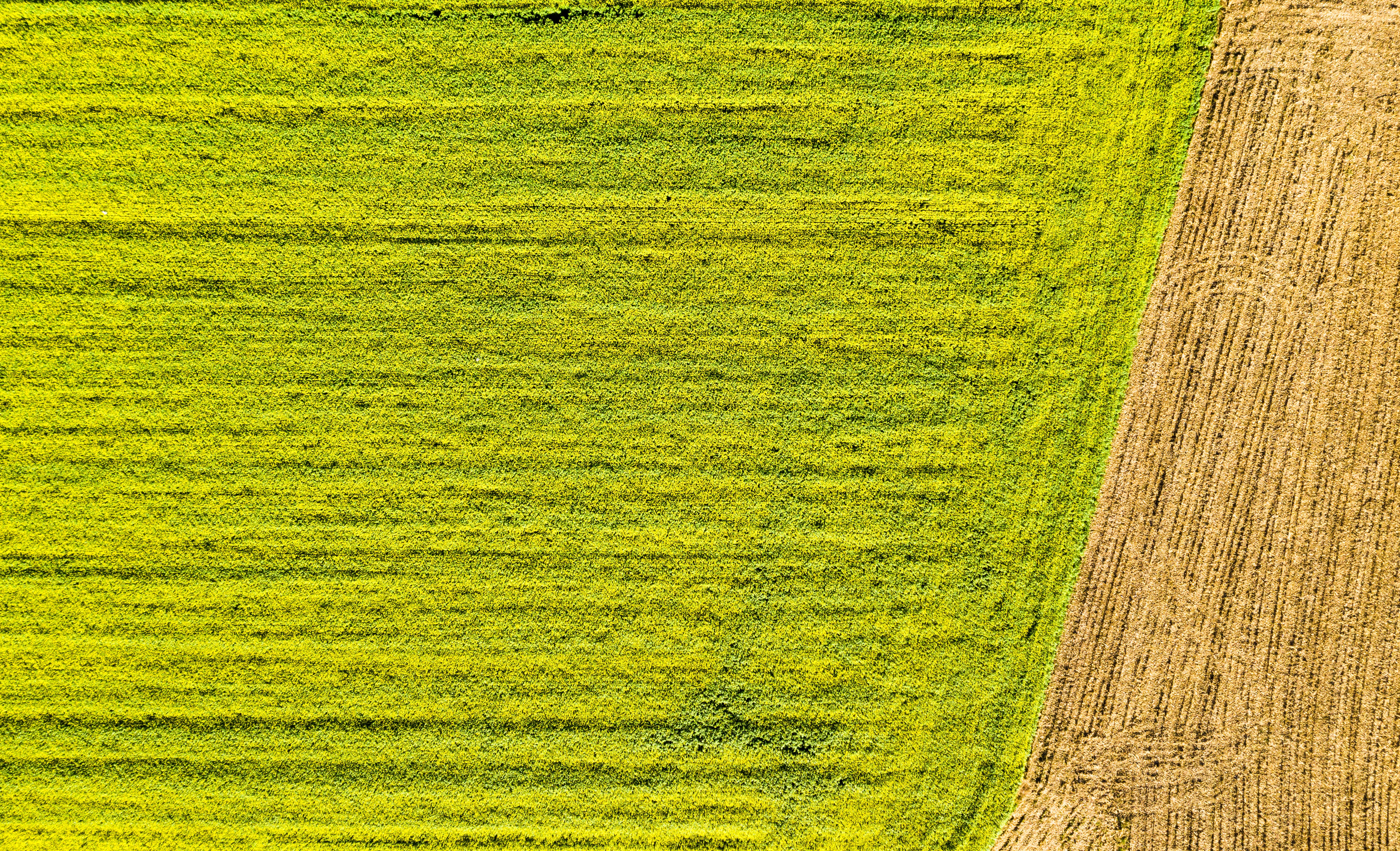 Free stock photo of aerial photography, color, drone photography, farmer