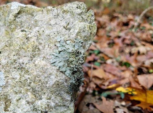 Ilmainen kuvapankkikuva tunnisteilla jäkälä, kallio, kuivat lehdet, luonto