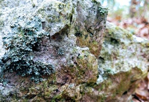 Ilmainen kuvapankkikuva tunnisteilla jäkälä, kallio, luonto, luontokuvaus