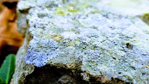 Ilmainen kuvapankkikuva tunnisteilla jäkälä, kallio, kuivat lehdet, lehvät