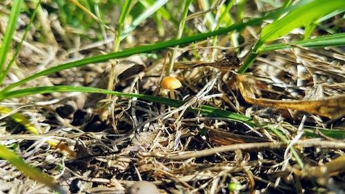 Ilmainen kuvapankkikuva tunnisteilla elämää luonnossa, kuiva ruoho, kuollut ruoho, lika