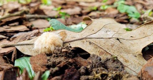 Ilmainen kuvapankkikuva tunnisteilla elämää luonnossa, koi munia, kuiva lehti, lika