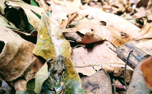 Ilmainen kuvapankkikuva tunnisteilla elämää luonnossa, keppi, kriketti, kuivat lehdet