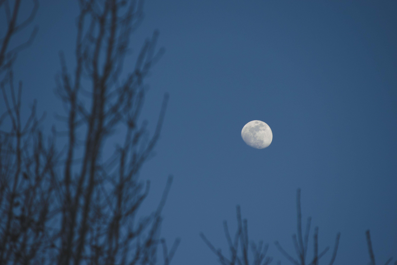 Free stock photo of dream, dreamy, moon, night