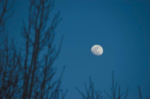 skym, 壁紙, 晚上, 月亮 的 免费素材照片