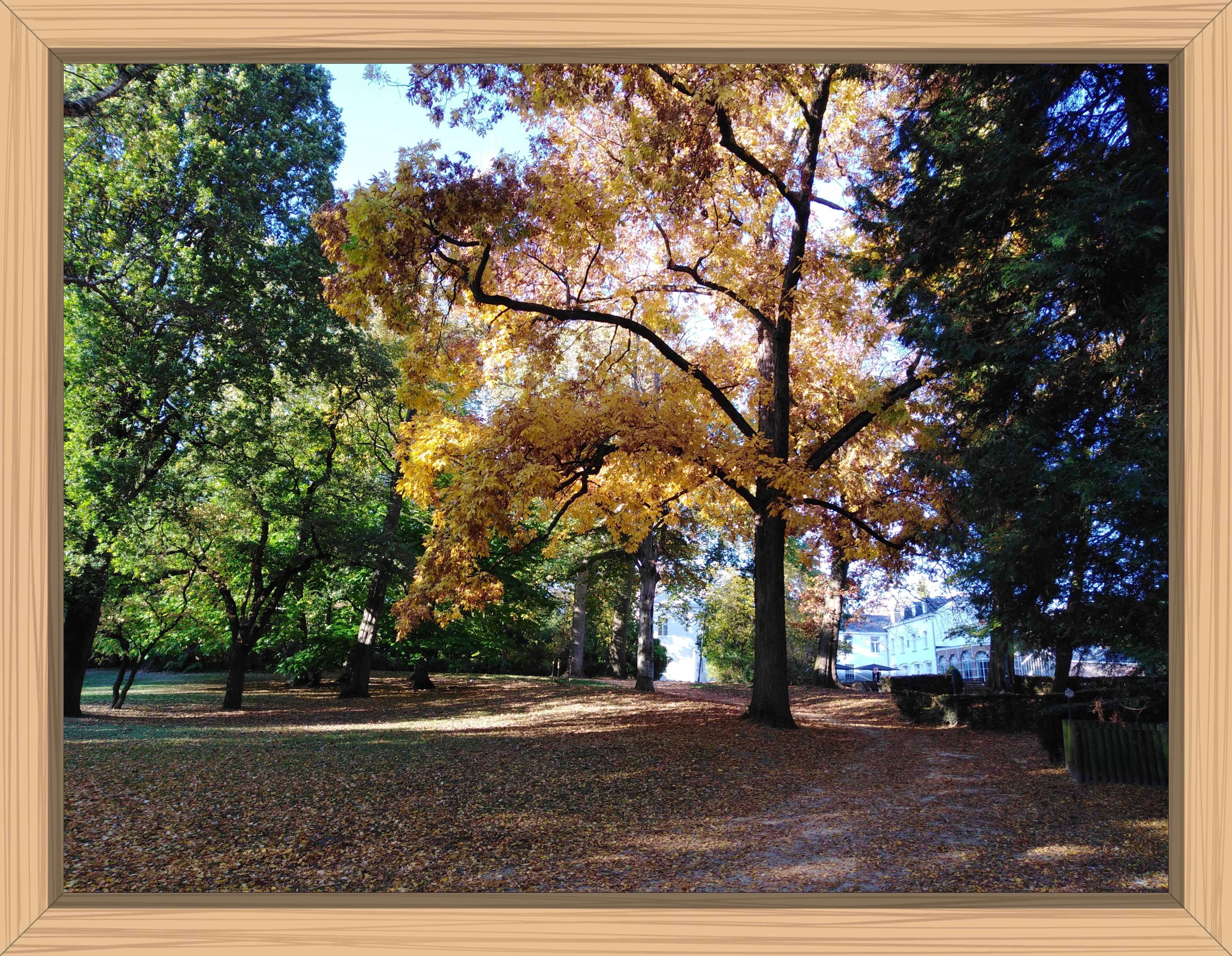 Free stock photo of autumn, autumn colors