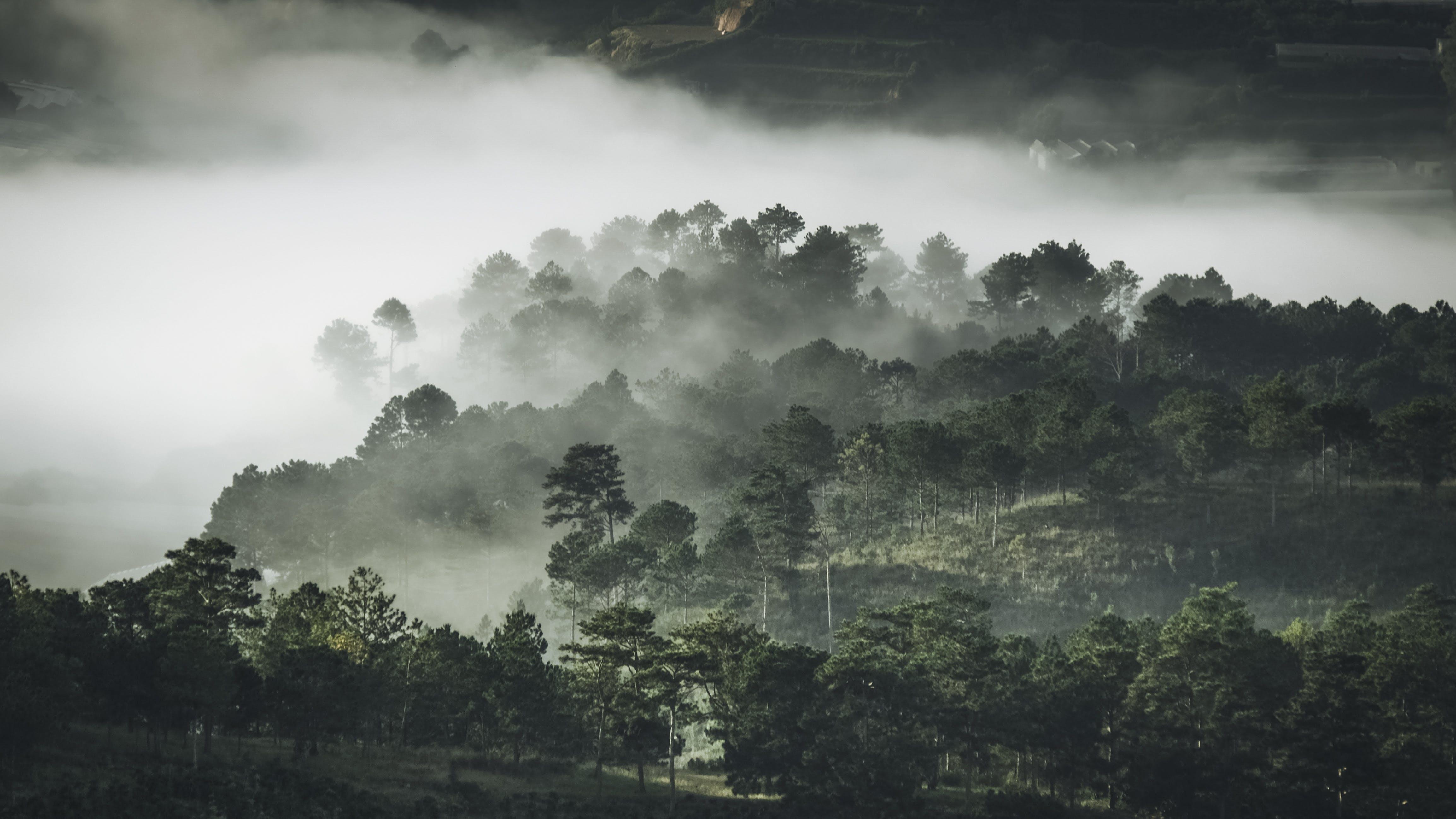 Free stock photo of landscape, trees, fog, foggy
