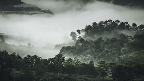 Foto profissional grátis de camada, casa de vidro, enevoado, neblina