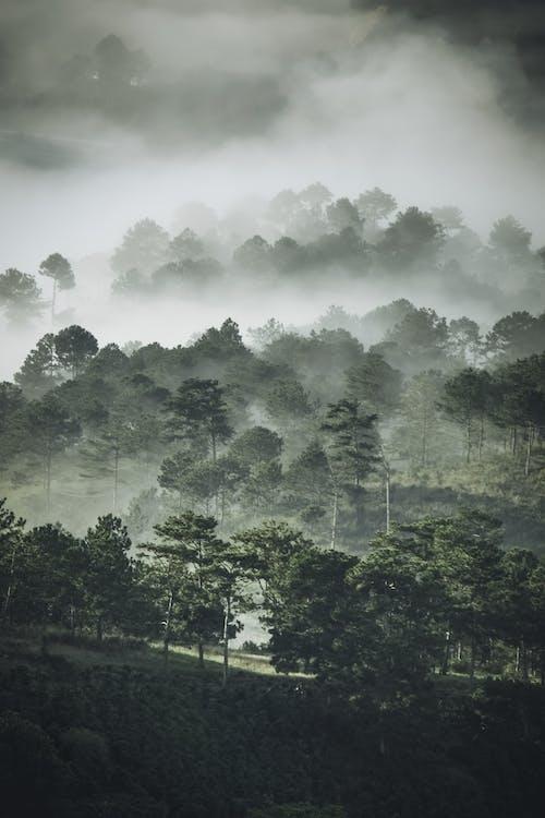 Foto profissional grátis de árvores, camada, enevoado, neblina