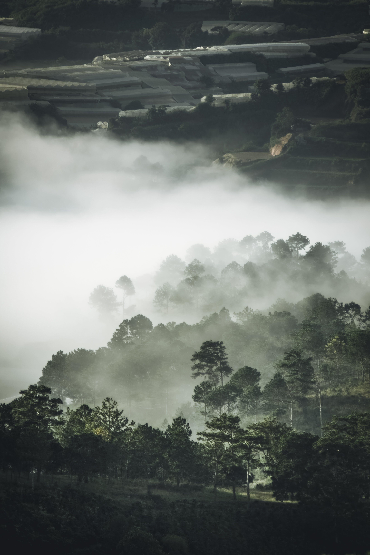 從上面, 有霧, 樹木, 空中拍攝 的 免费素材照片
