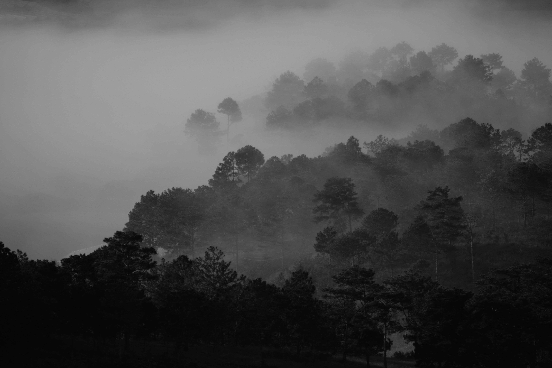Free stock photo of landscape, fog, foggy, tree