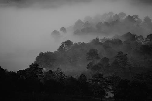 Foto profissional grátis de árvore, camada, enevoado, neblina
