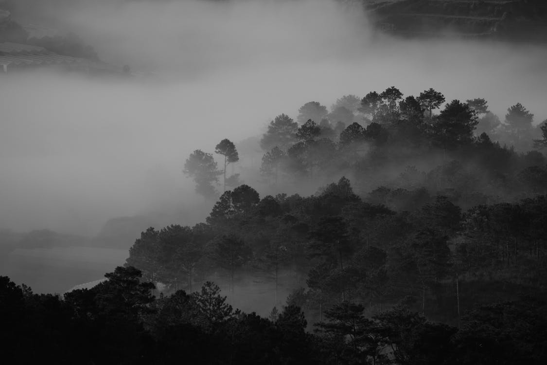 Grayscale Photography of Trees