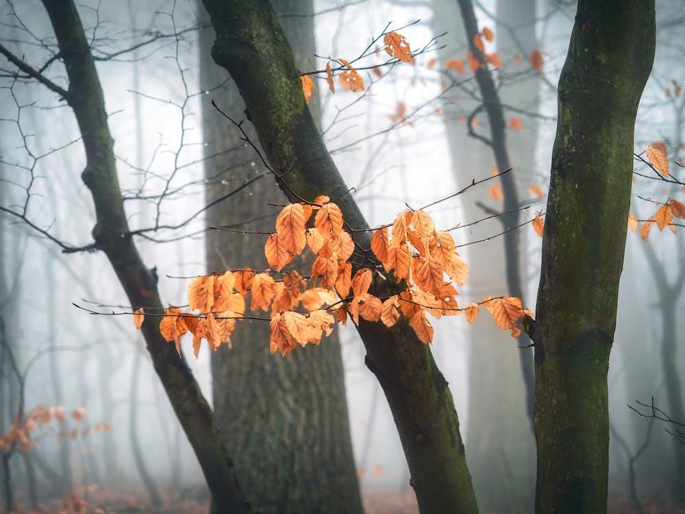 Brown Leafed Trees Wallpaper