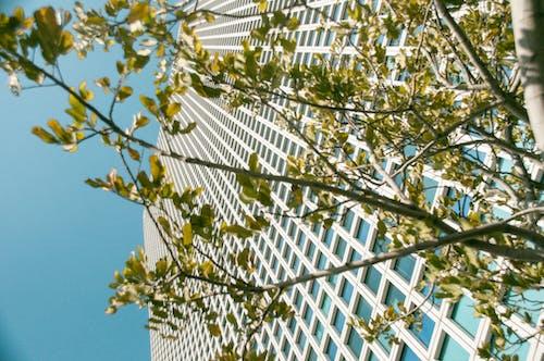 คลังภาพถ่ายฟรี ของ whitebuilding, การเดินทาง, ตึก, ย่าน