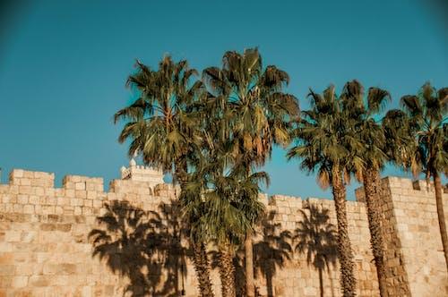 คลังภาพถ่ายฟรี ของ การเดินทาง, กำแพง, ตึกร้าง, ต้นไม้