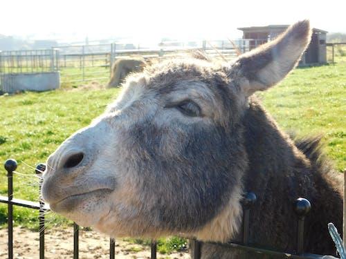 Foto stok gratis keledai