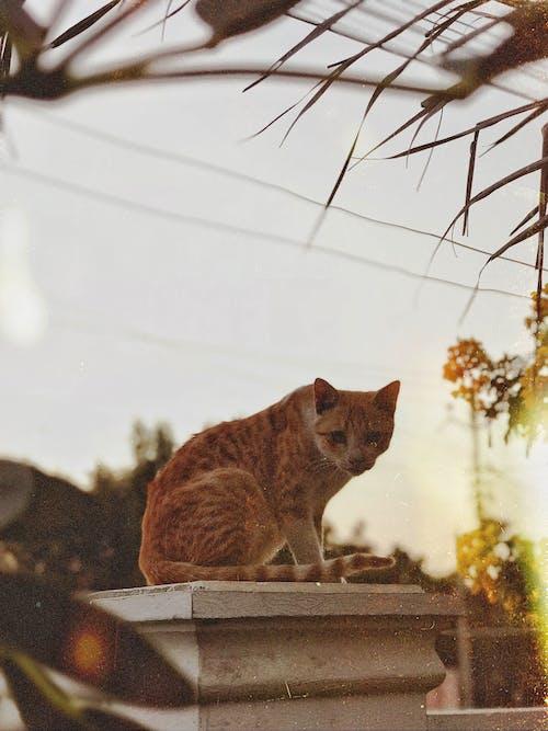 Бесплатное стоковое фото с в помещении, домашний, домашняя кошка, животное