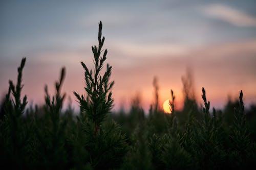 Darmowe zdjęcie z galerii z drzewa, głębia ostrości, lato, podświetlony