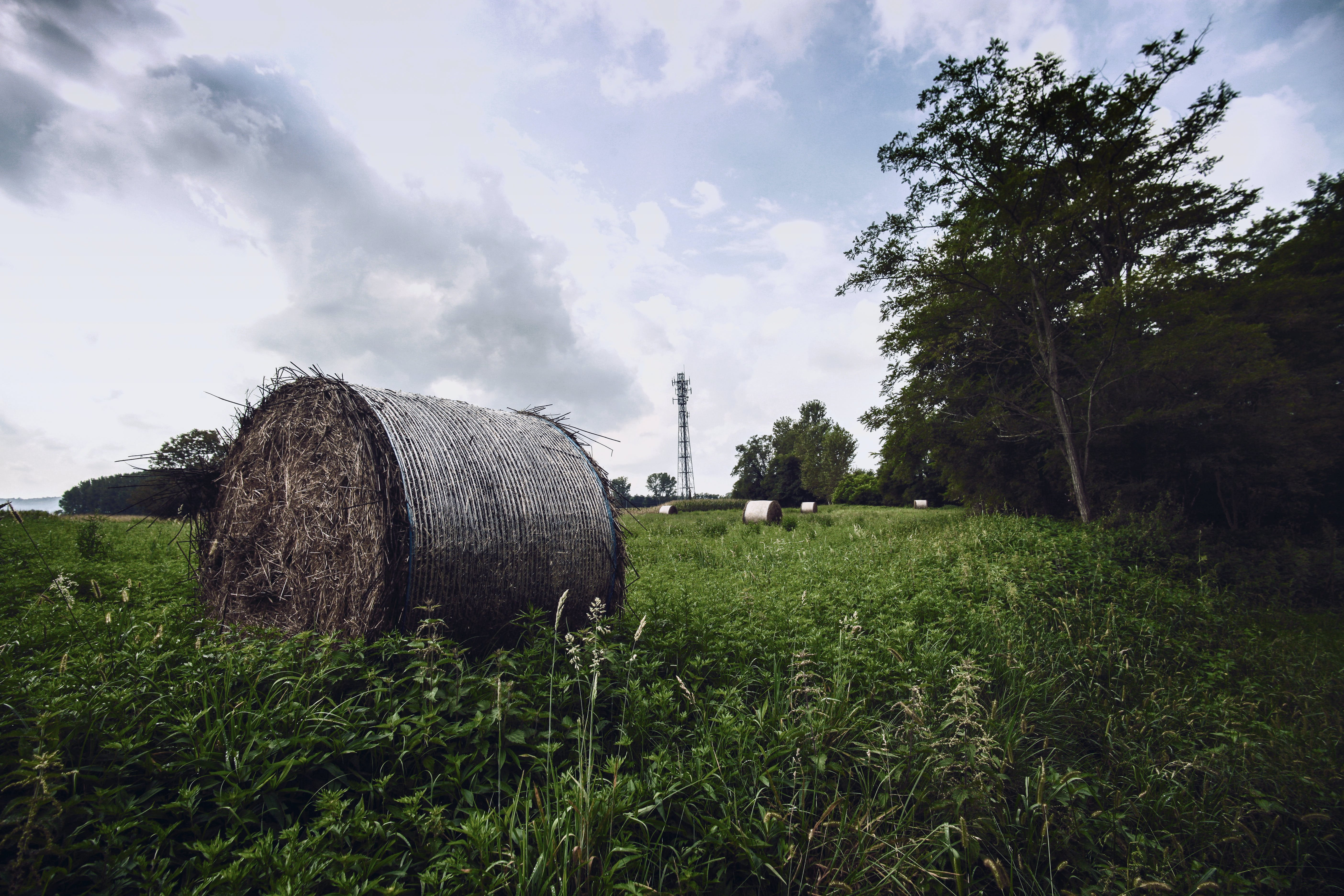 Hay Rolls on Green Grass Under White and Blue Sky