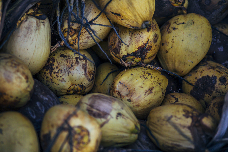 Kostenloses Stock Foto zu kokosnuss, kokospalme, strand, tropisch