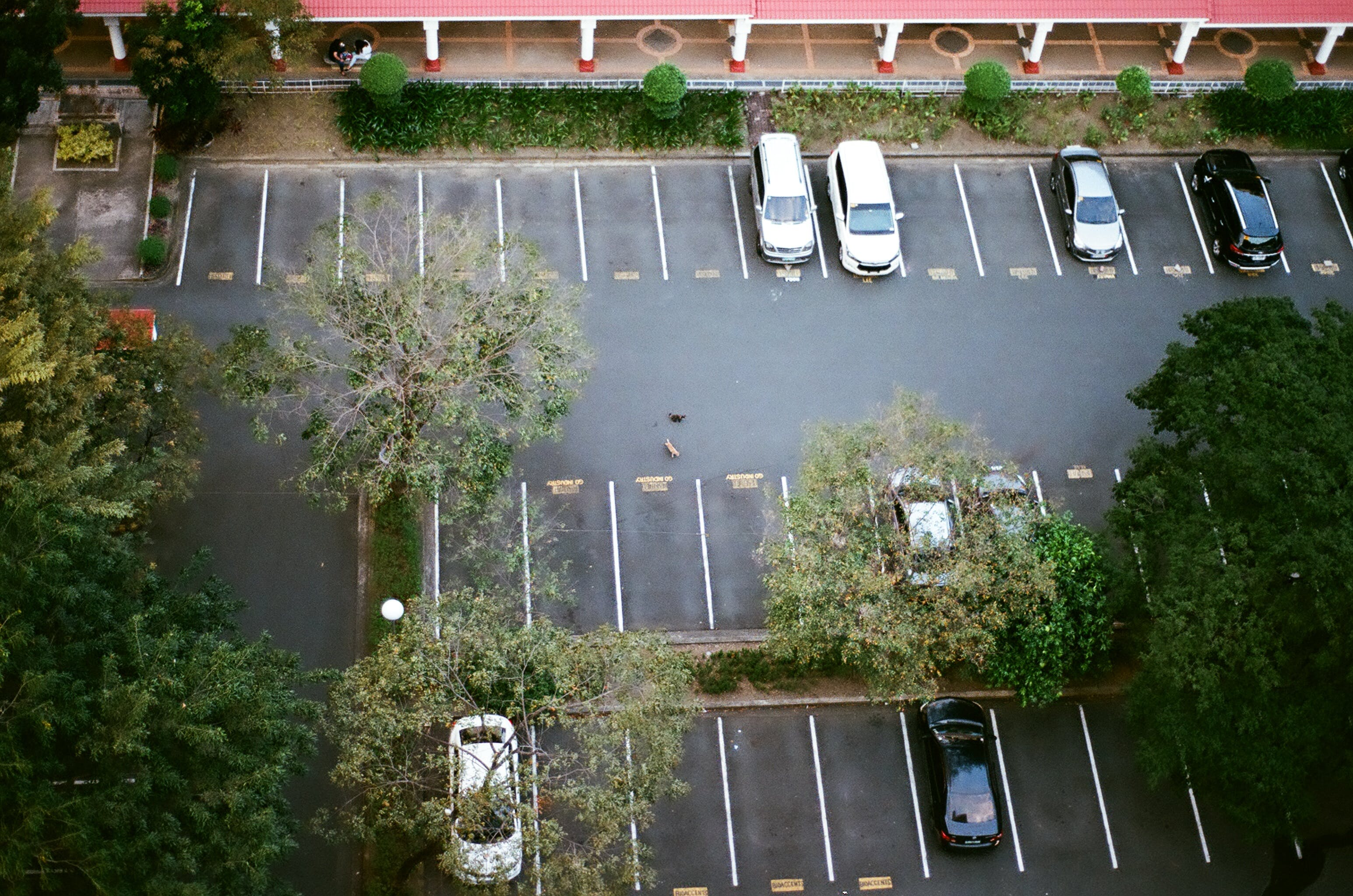 Free stock photo of cars, parking, parking slot