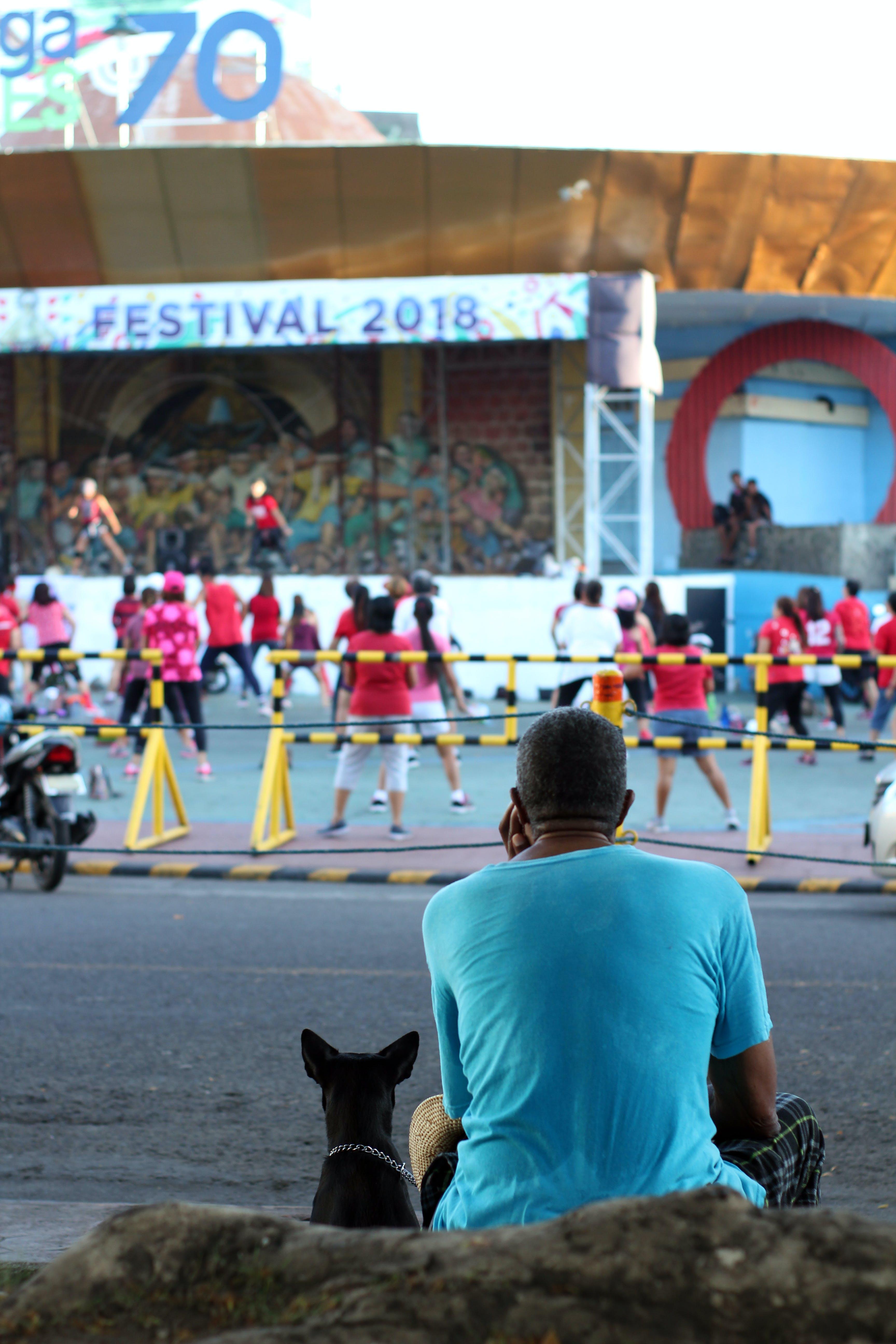 Free stock photo of animal, dog, festival, human
