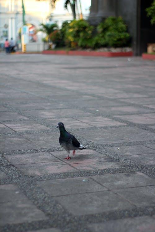Ảnh lưu trữ miễn phí về chim bồ câu, thành phố