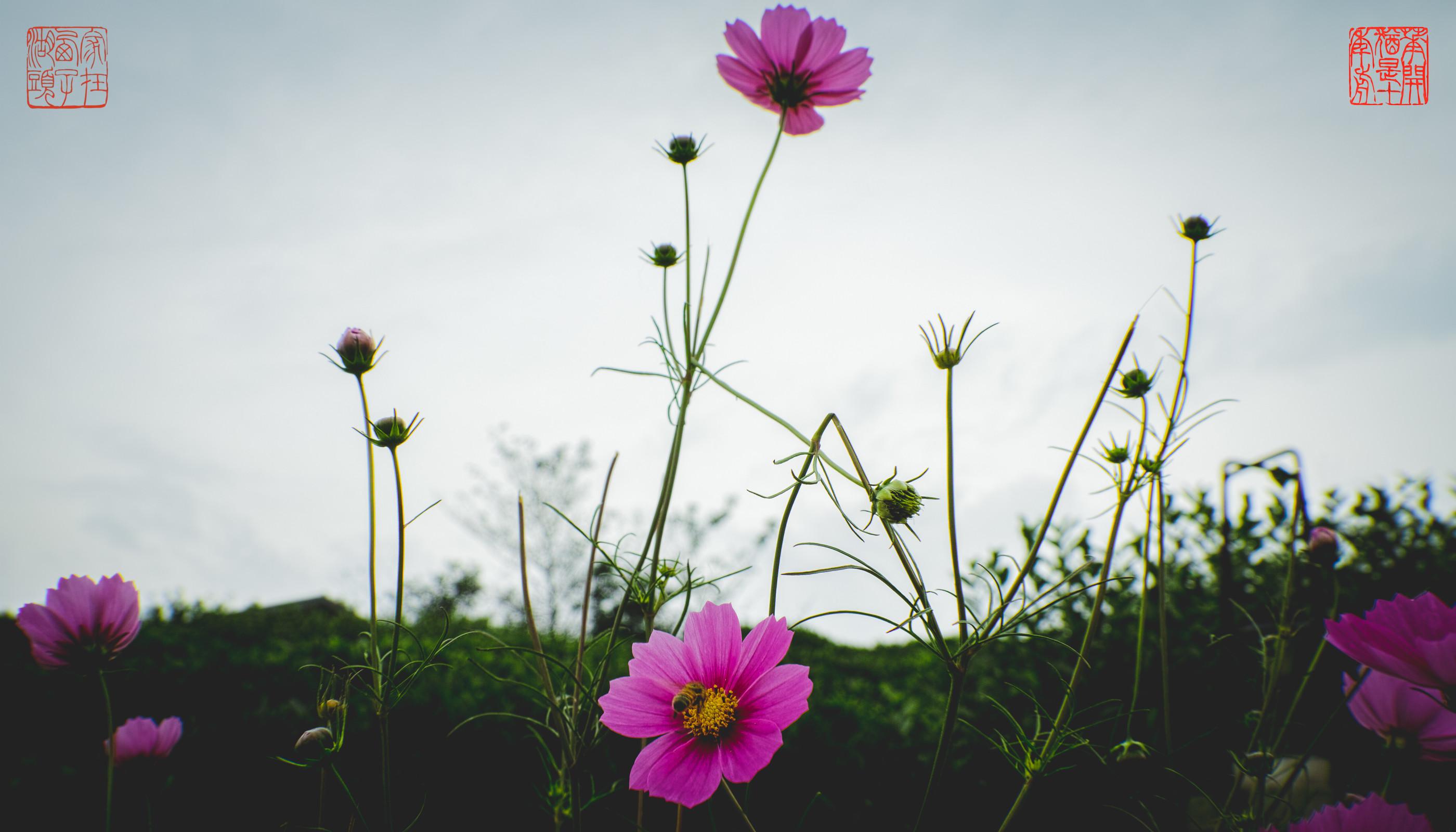 красивые картинки с цветами для фона