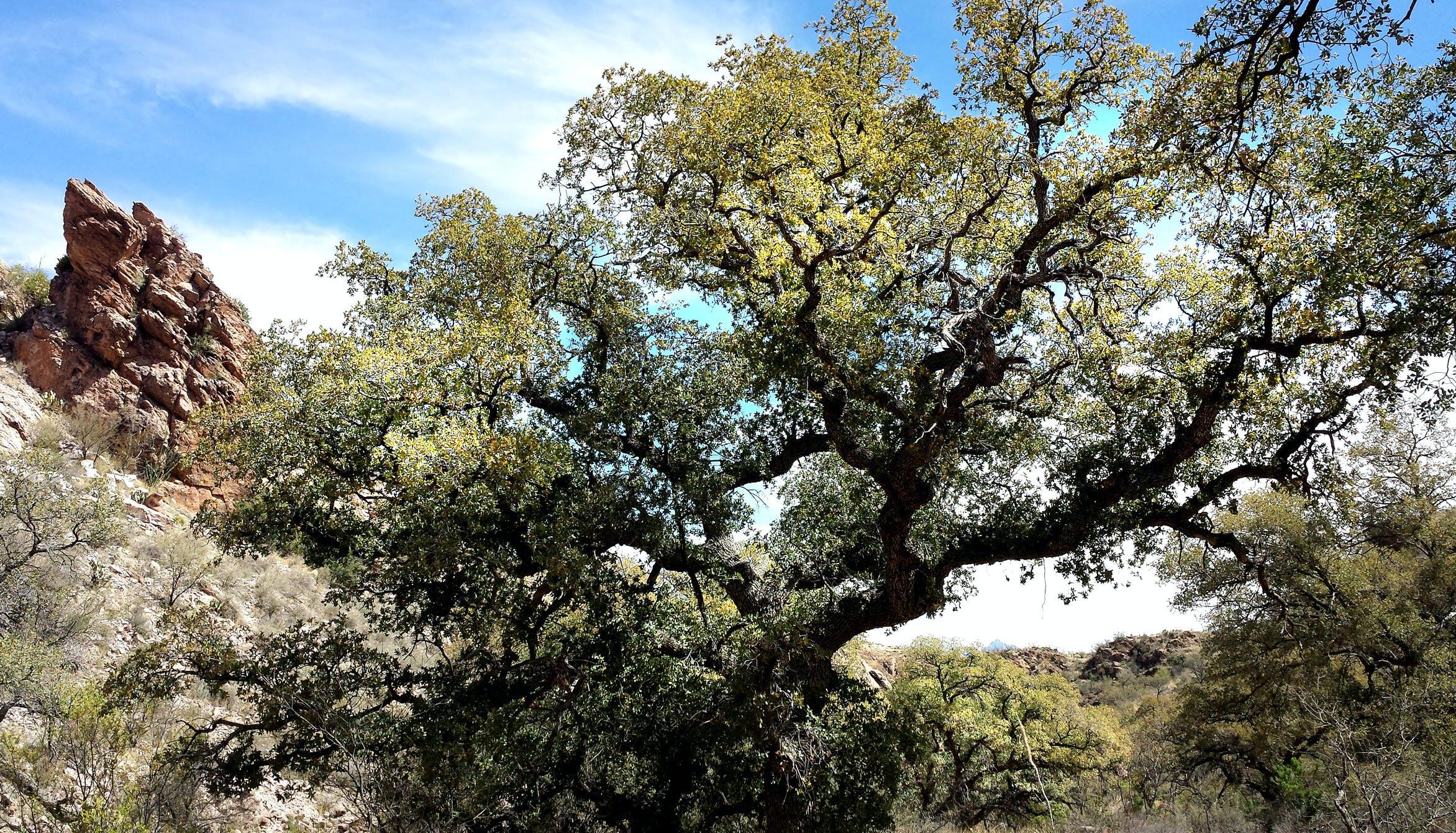 Kostenloses Stock Foto zu äste, bäume, landschaft, natur