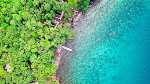 Foto profissional grátis de aerofotografia, água, árvores, atraente