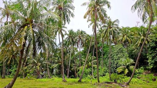 印尼, 叢林, 天堂, 棕櫚樹 的 免費圖庫相片