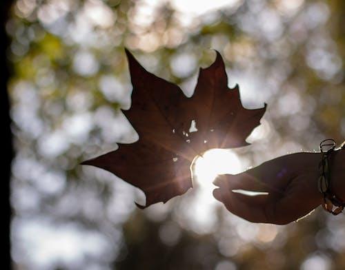 Základová fotografie zdarma na téma barvy podzimu, příroda, slunce