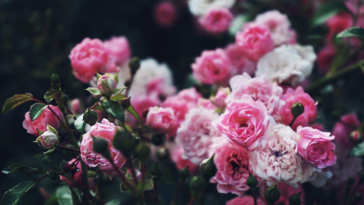 ánh sáng ban ngày, cận cảnh, cánh hoa