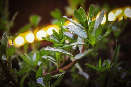 Free stock photo of aquatic plants, dark green, plant