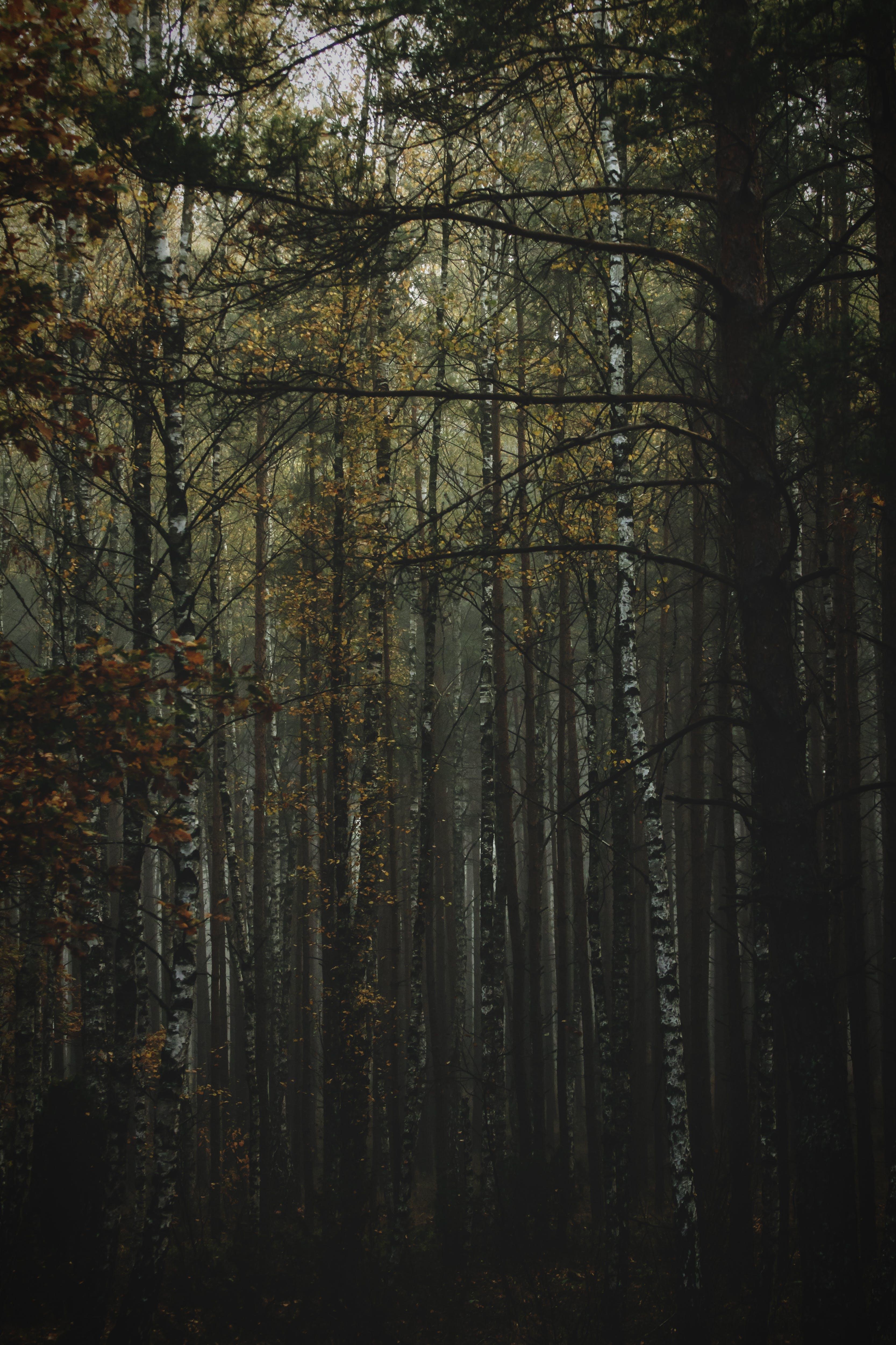 Free stock photo of autumn, fall colors, nature