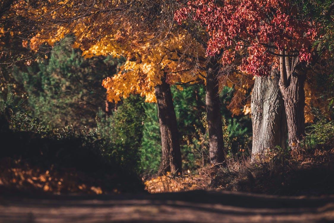 Red and Orange Maple Leaves on Tree