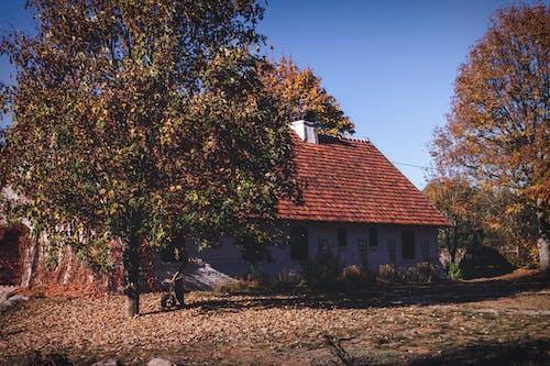 Ảnh lưu trữ miễn phí về ánh sáng ban ngày, căn nhà, cây, kiến trúc