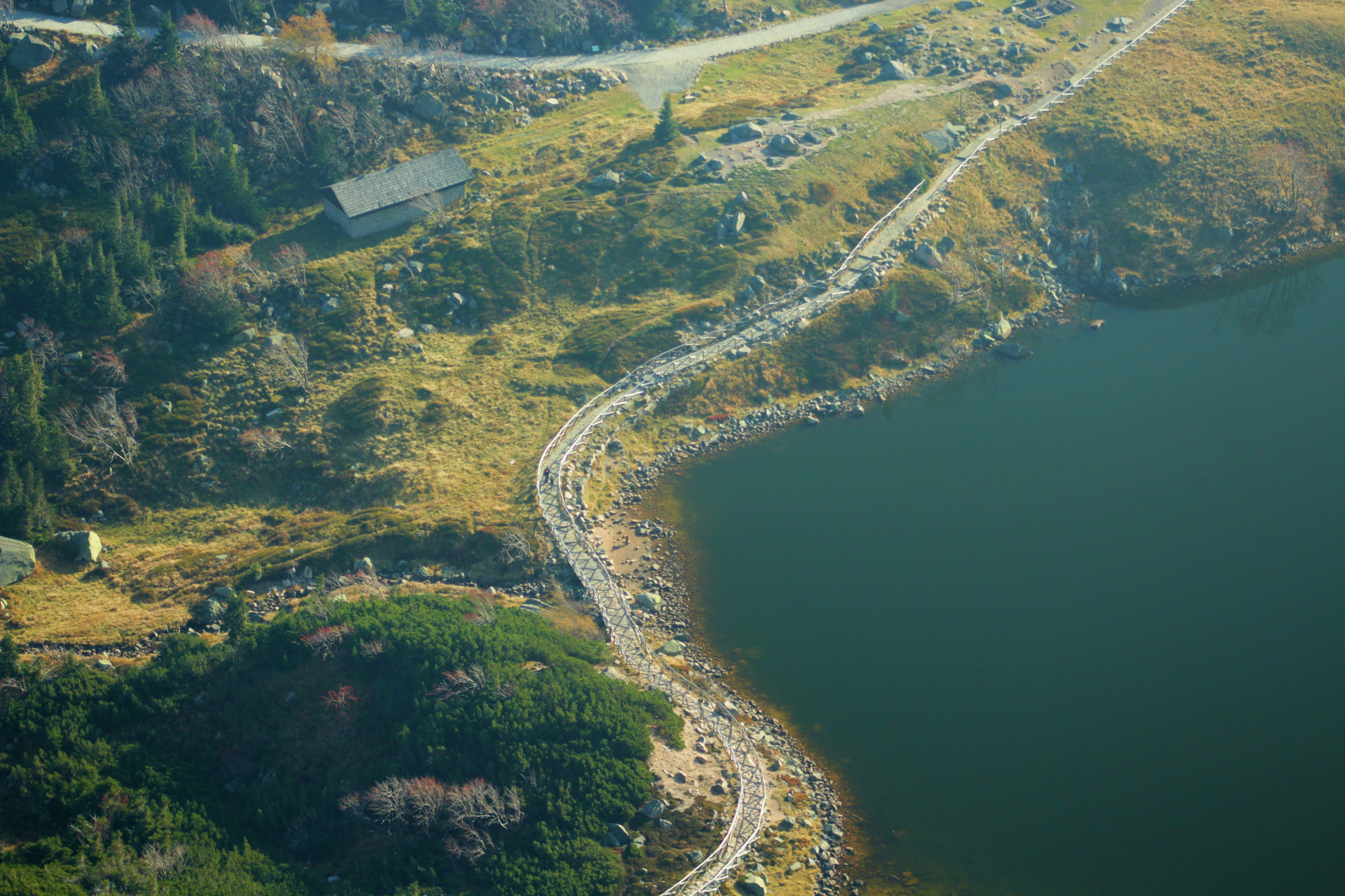 Foto d'estoc gratuïta de bosc, carreteres, colpejar, turisme