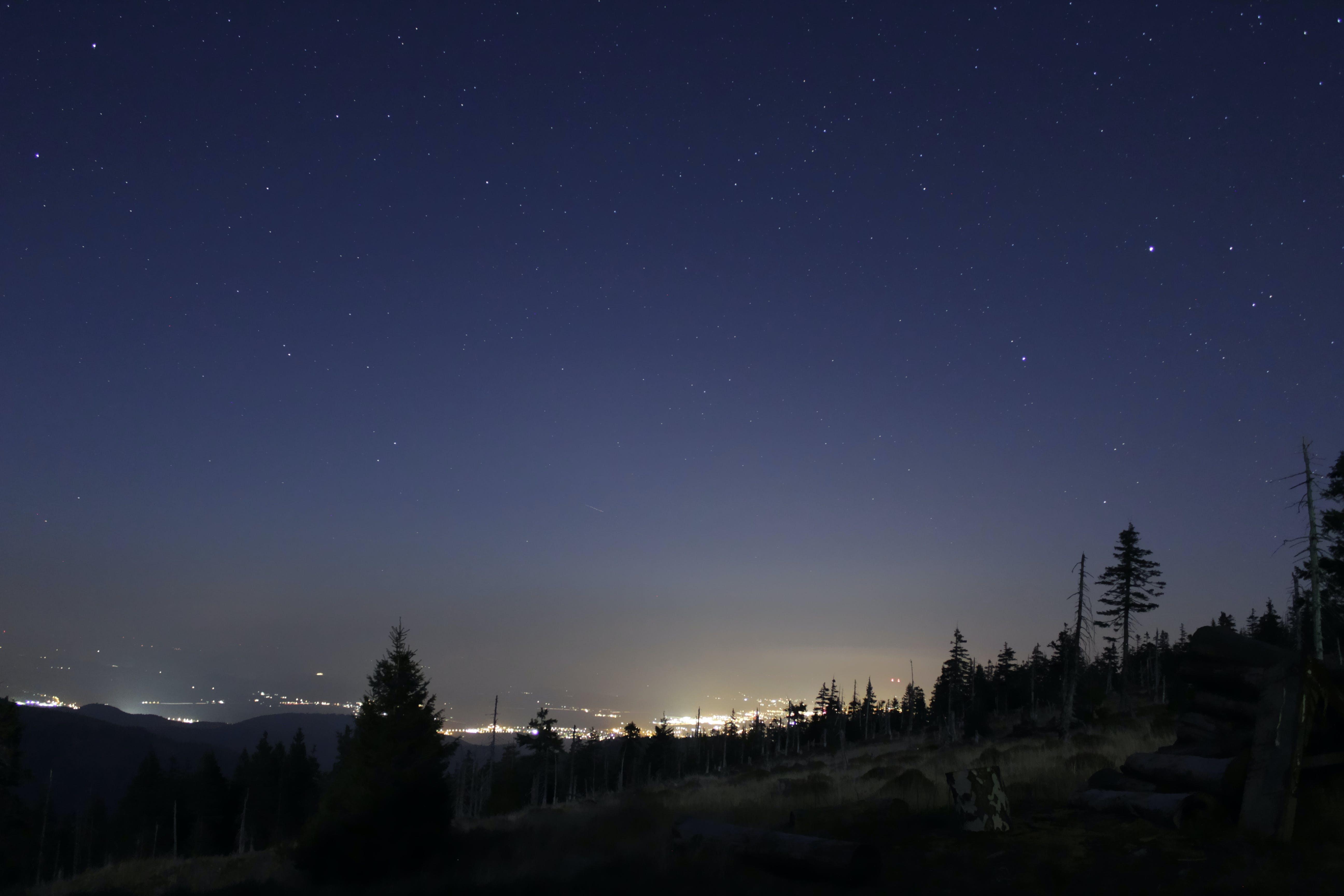 Foto d'estoc gratuïta de arbres, cel nocturn, ciutat, clareja