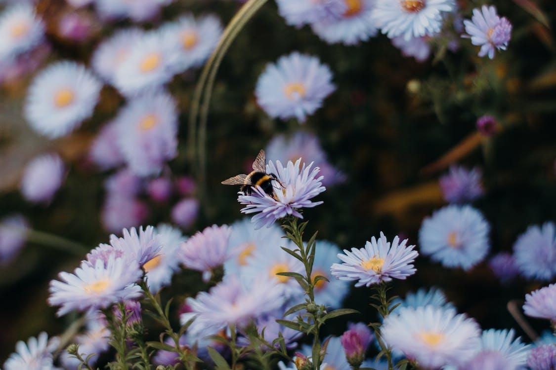 abeja, bonito, campo