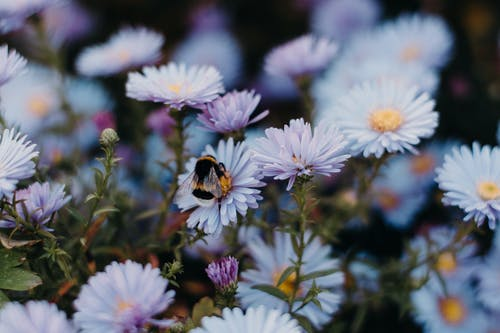 Darmowe zdjęcie z galerii z fioletowe kwiaty, kolor, kwiaty, kwitnięcie
