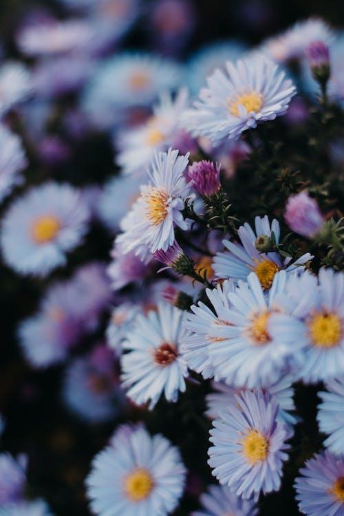 Fotobanka sbezplatnými fotkami na tému flóra, jarné kvety, krásny, kvet ovocného stromu