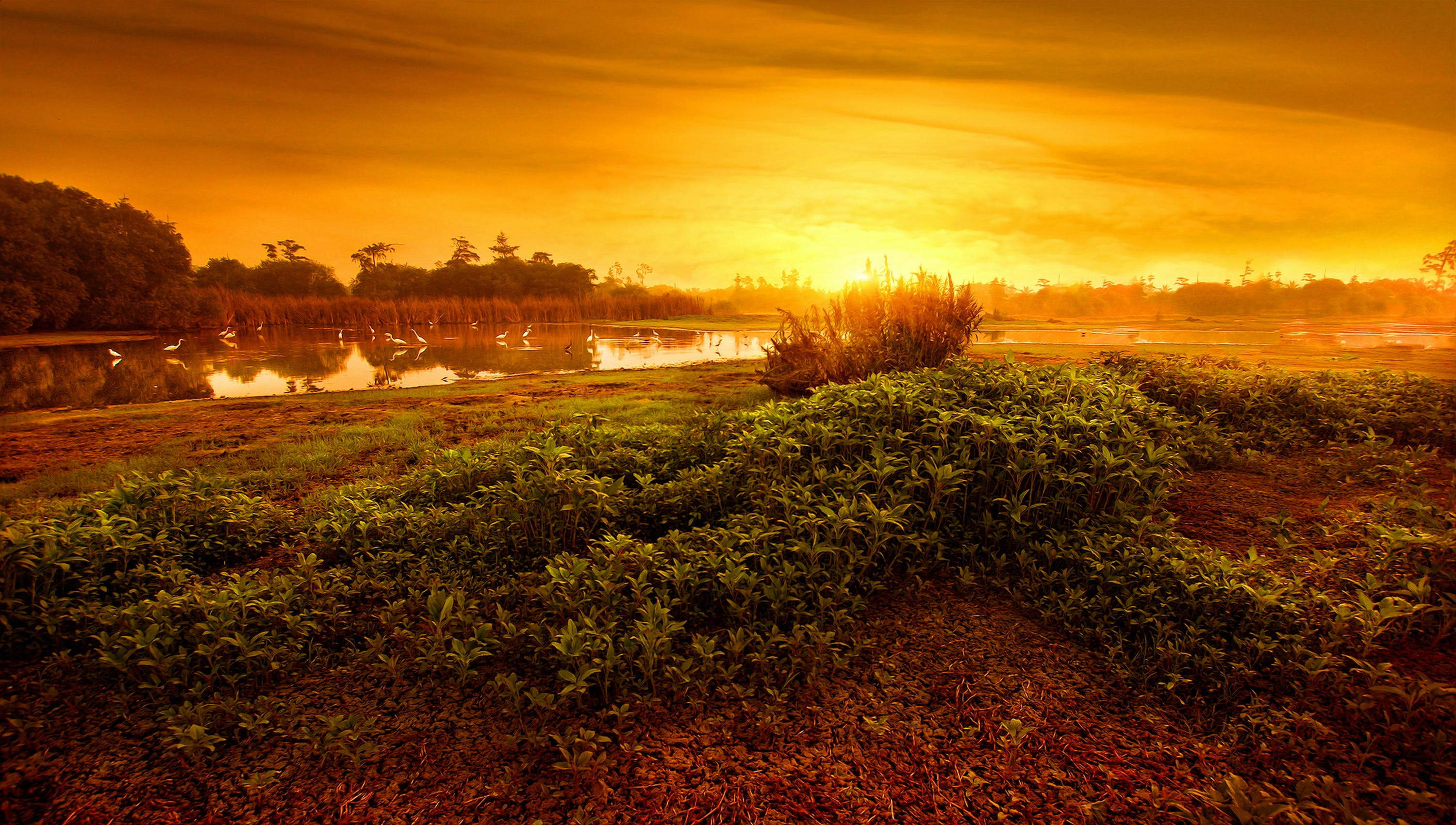 Calm Body of Water Surrounded by Grass during Golden Hour
