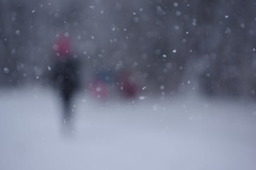 Fotos de stock gratuitas de invierno, nevar