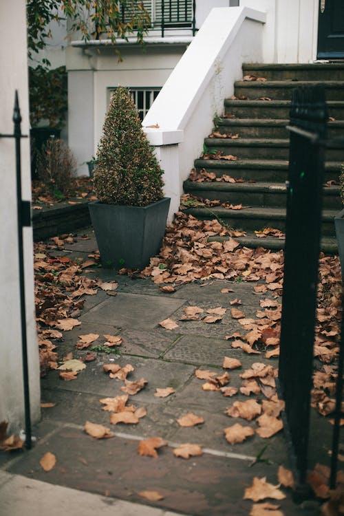 Foto profissional grátis de arquitetura, degraus, entrada, exterior