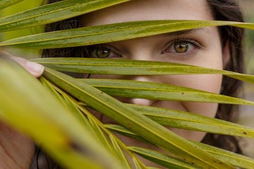 Základová fotografie zdarma na téma jasný, oči, palmové listy, prostředí