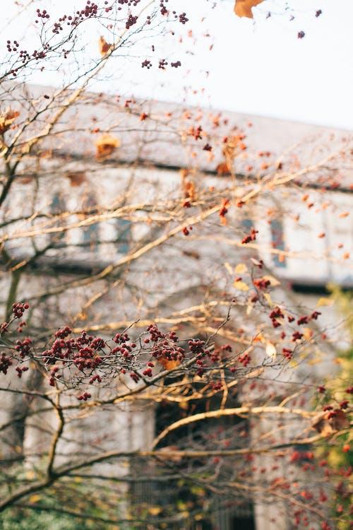 คลังภาพถ่ายฟรี ของ กิ่ง, ความชัดลึก, ต้นไม้, พร่ามัว