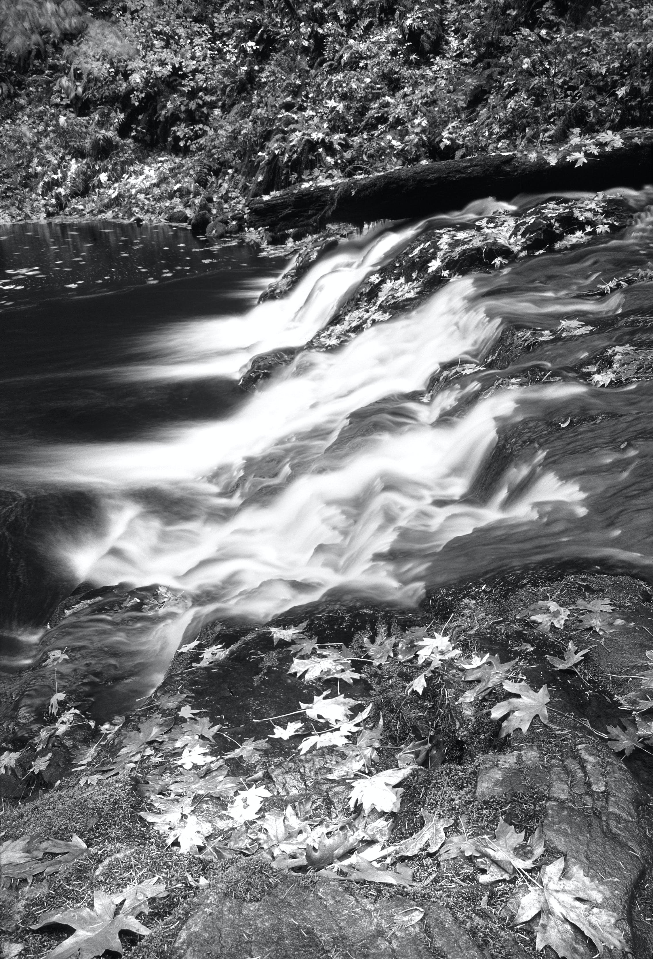 Grayscale Photography of Falling Leaves Near Running Water