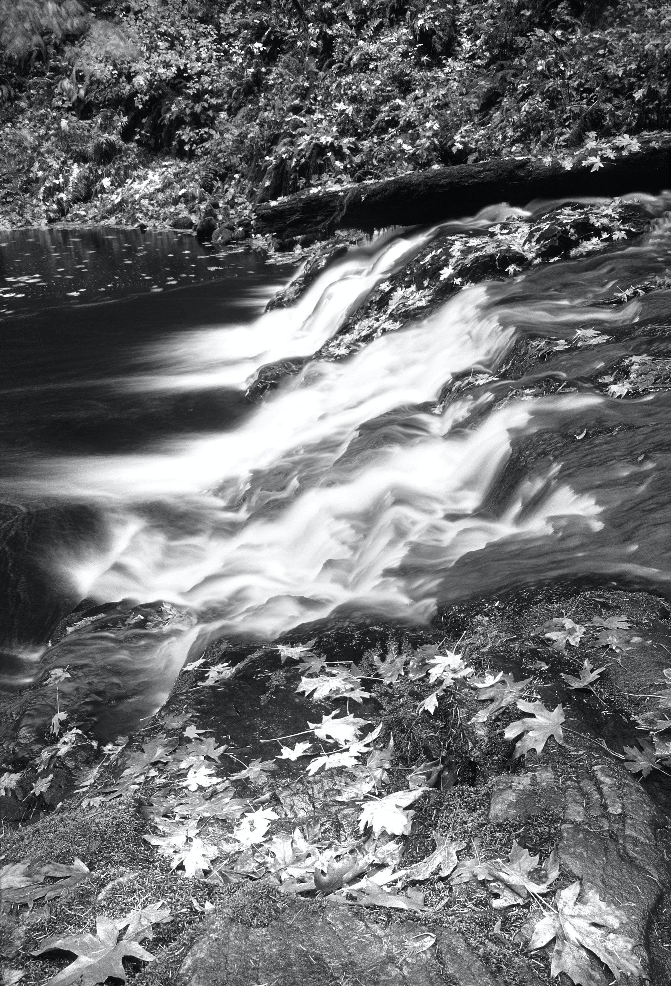 Foto stok gratis air, air terjun, aliran, daun maple